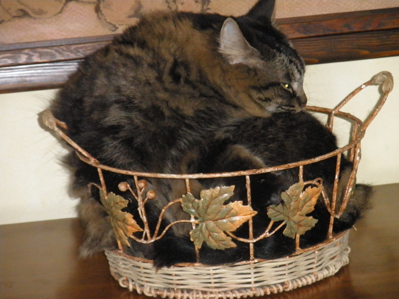 Basket Beast